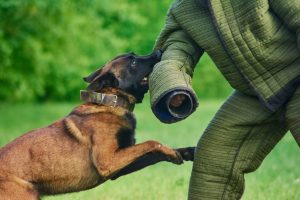 K9 training bite work and scent detection - Security Training Classes